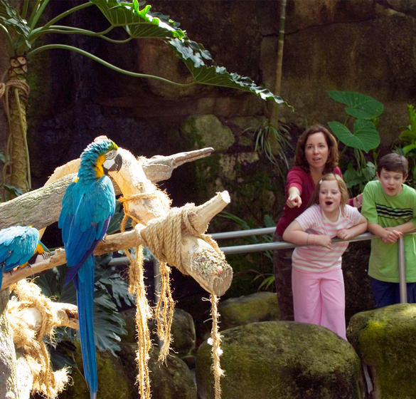 Family Looking at Macaws